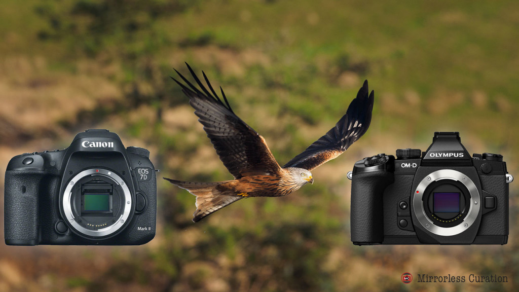 Canon 7D mark II vs. Olympus E-M1 for bird photography – A comparison by Loren Runyon